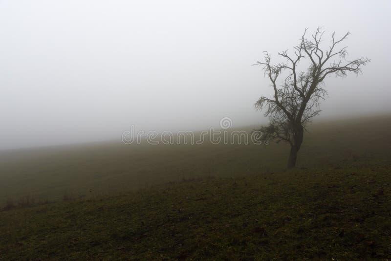 Ένα παλαιό άρρωστο δέντρο στην ομίχλη στοκ φωτογραφία με δικαίωμα ελεύθερης χρήσης