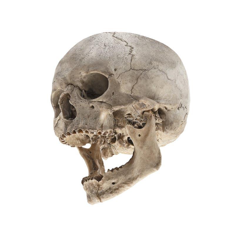 Ένα παλαιό ανθρώπινο κρανίο με ένα σαγόνι χωρίς δόντια στοκ εικόνα