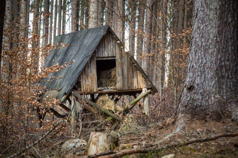 Ένα παλαιό λιβάδι για τα ζώα στο δάσος στοκ εικόνα