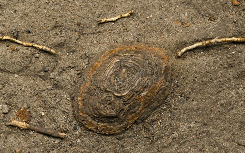 Ένα παλιό κούτσουρο που περιβάλλεται από τέσσερα κλαδιά στοκ εικόνες