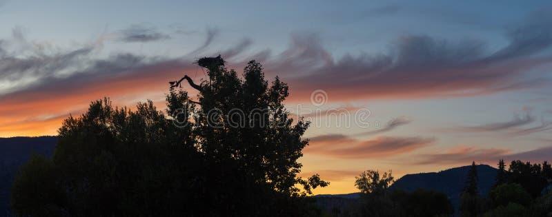 Ένα πανόραμα ηλιοβασιλέματος βραδιού Kelowna από το περιστροφικό έλος που εξετάζει τη φωλιά Osprey με Osprey που τρώει ένα ψάρι μ στοκ φωτογραφία με δικαίωμα ελεύθερης χρήσης