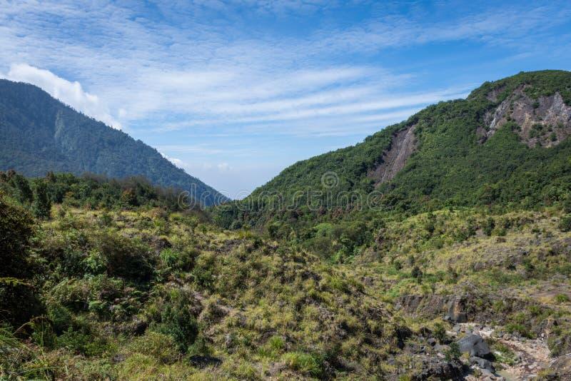 Ένα παχύ δάσος στο υποστήριγμα Papandayan με το σαφή μπλε ουρανό Το βουνό Papandayan είναι μια από την αγαπημένη θέση για σε Garu στοκ εικόνες