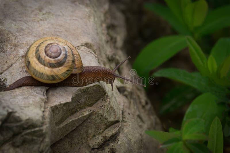 Ένα περίεργο σαλιγκάρι στοκ φωτογραφία με δικαίωμα ελεύθερης χρήσης