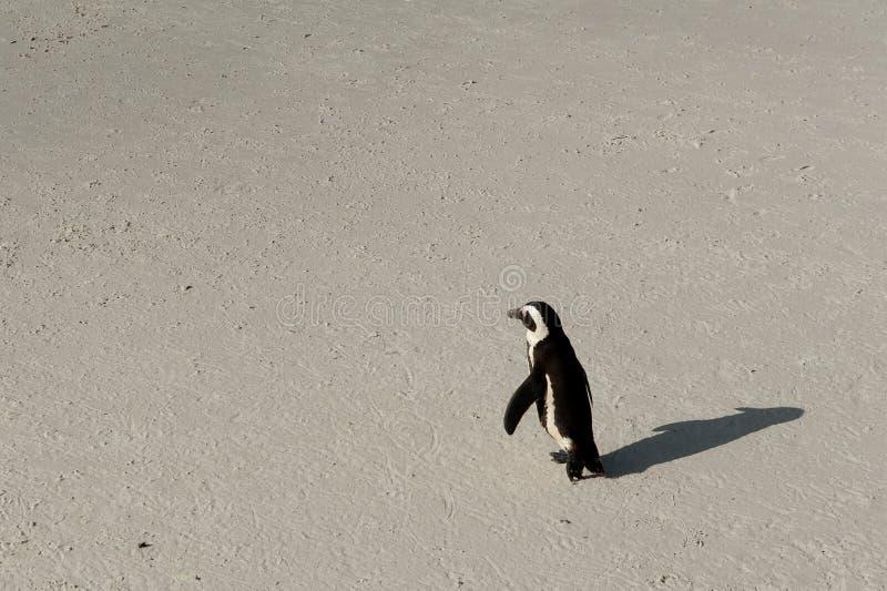 Ένα περπάτημα penguin στοκ φωτογραφίες