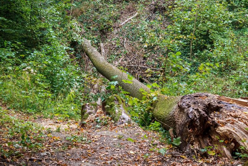 Ένα πεσμένο δέντρο στο τροπικό δάσος Hoh αποσυντίθεται και ανακυκλώνει τις θρεπτικές ουσίες του στοκ φωτογραφίες