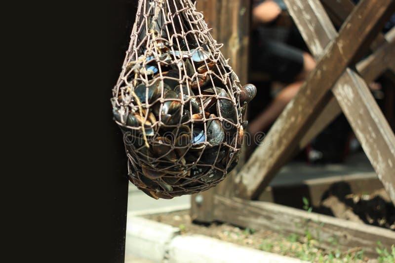 Ένα πλέγμα με τα μύδια κρεμά στην είσοδο σε ένα εστιατόριο θαλασσινών στη θάλασσα Θαλασσινά, μεσογειακή διατροφή, υγιή τρόφιμα στοκ εικόνες με δικαίωμα ελεύθερης χρήσης