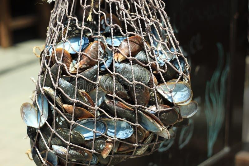 Ένα πλέγμα με τα μύδια κρεμά στην είσοδο σε ένα εστιατόριο θαλασσινών στη θάλασσα Θαλασσινά, μεσογειακή διατροφή, υγιή τρόφιμα στοκ φωτογραφία με δικαίωμα ελεύθερης χρήσης