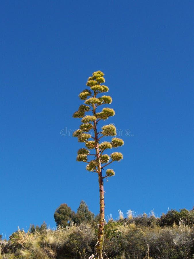 Ένα πολύ ψηλό δέντρο στοκ φωτογραφίες με δικαίωμα ελεύθερης χρήσης