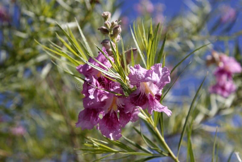 Ένα πορφυρό λουλούδι στοκ εικόνα με δικαίωμα ελεύθερης χρήσης
