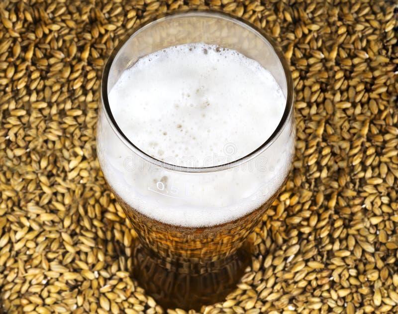 Ένα ποτήρι της μπύρας στο υπόβαθρο της βύνης στοκ εικόνες με δικαίωμα ελεύθερης χρήσης
