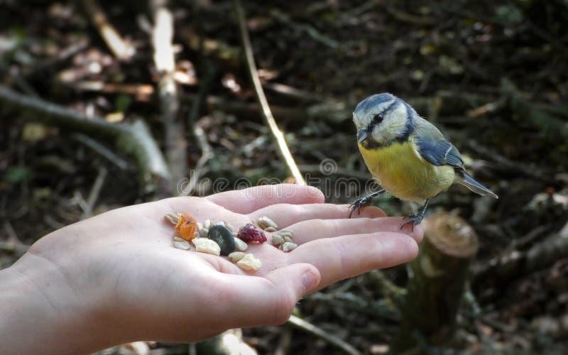 Ένα πουλί ήρθε να φάει στοκ εικόνα με δικαίωμα ελεύθερης χρήσης