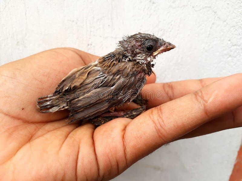 Ένα πουλί μωρών στοκ φωτογραφίες