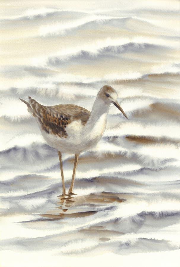 Ένα πουλί που περπατά από το watercolor θάλασσας στοκ εικόνες με δικαίωμα ελεύθερης χρήσης