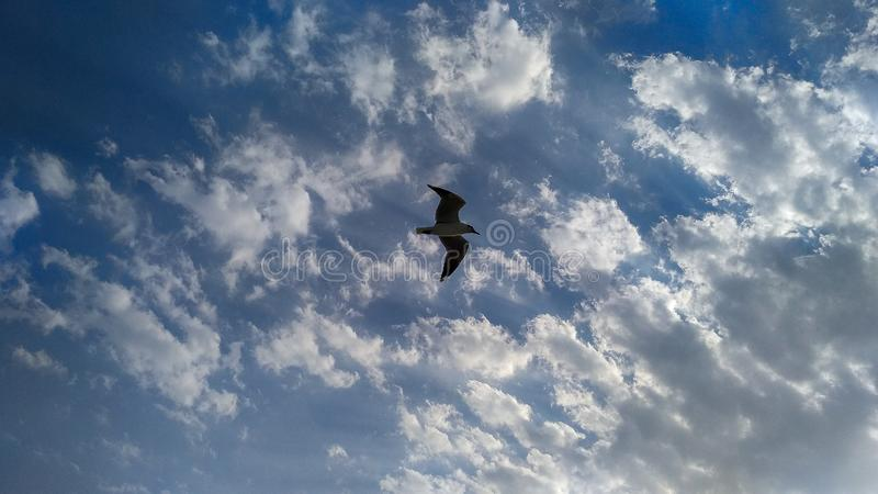 Ένα πουλί που πετά στον ουρανό - υψηλό στοκ εικόνες με δικαίωμα ελεύθερης χρήσης