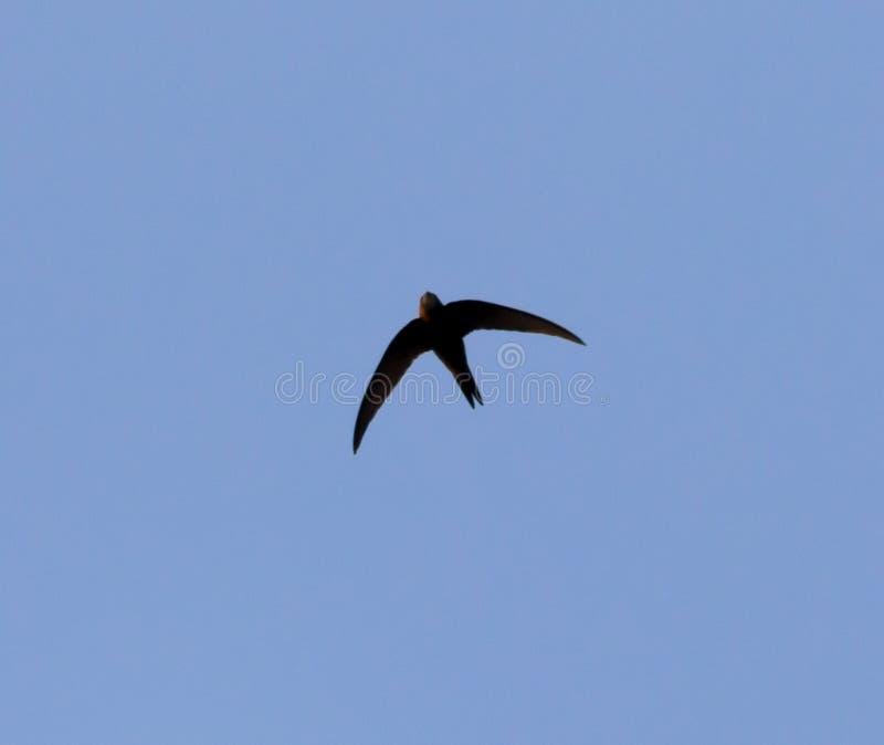 Ένα πουλί στο μπλε ουρανό στοκ εικόνα με δικαίωμα ελεύθερης χρήσης