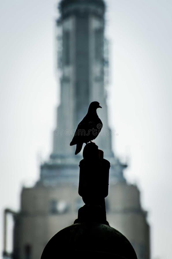 Ένα πουλί στοκ εικόνα με δικαίωμα ελεύθερης χρήσης