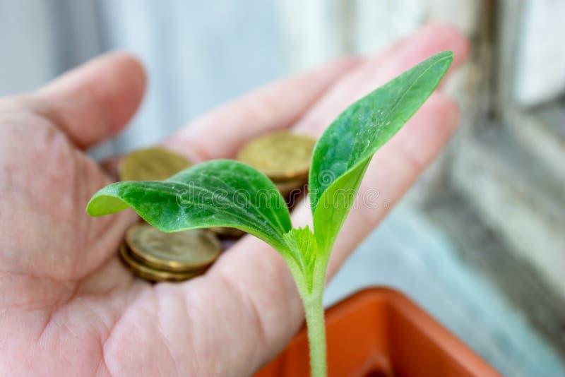 Ένα πράσινο σπορόφυτο των κολοκυθιών και ένα χέρι με τα νομίσματα στο υπόβαθρο - οικονομία και οικονομική αυξανόμενη έννοια στοκ φωτογραφία