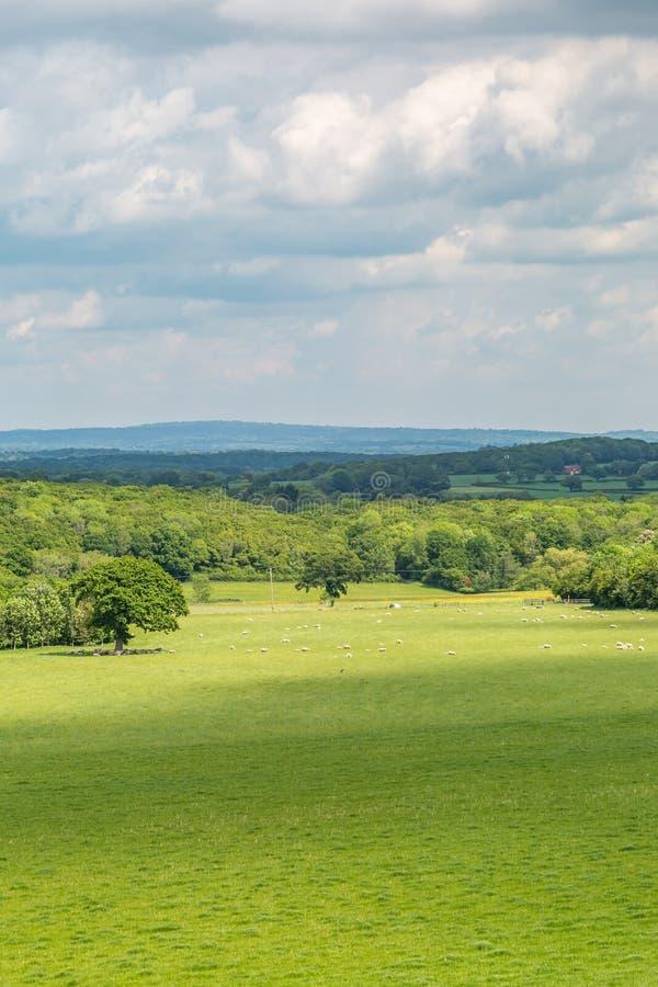 Ένα πράσινο τοπίο του Σάσσεξ στοκ φωτογραφίες