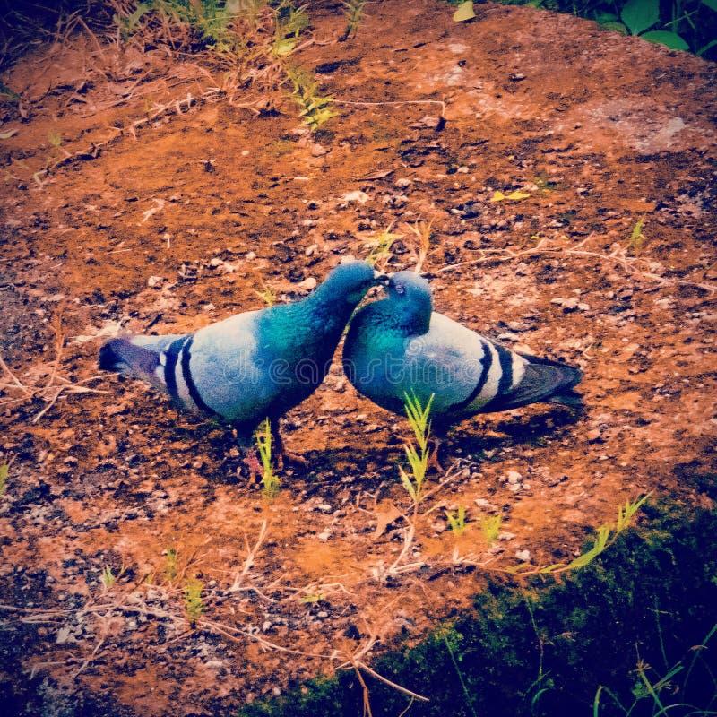 Ένα ρομαντικό ζεύγος στοκ φωτογραφία με δικαίωμα ελεύθερης χρήσης