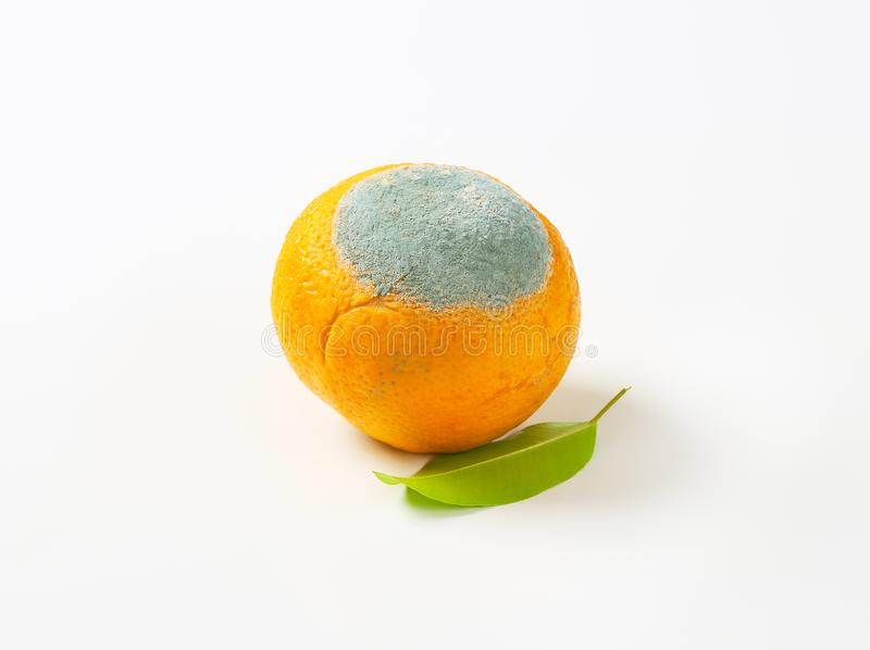 Ένα σάπιο πορτοκάλι στοκ εικόνες με δικαίωμα ελεύθερης χρήσης