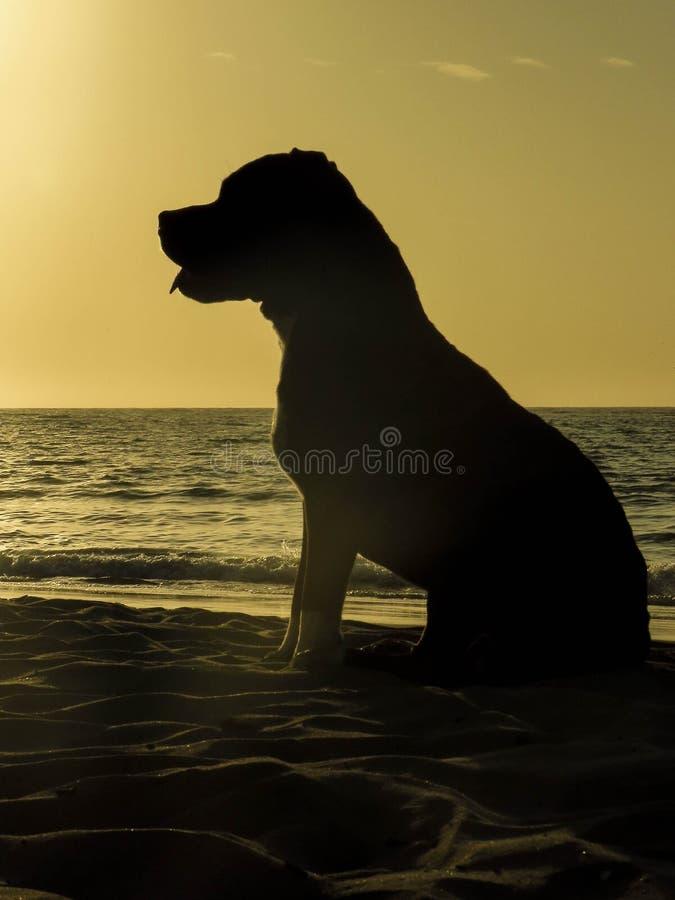 Ένα σκυλί απολαμβάνει το ηλιοβασίλεμα στοκ φωτογραφίες με δικαίωμα ελεύθερης χρήσης