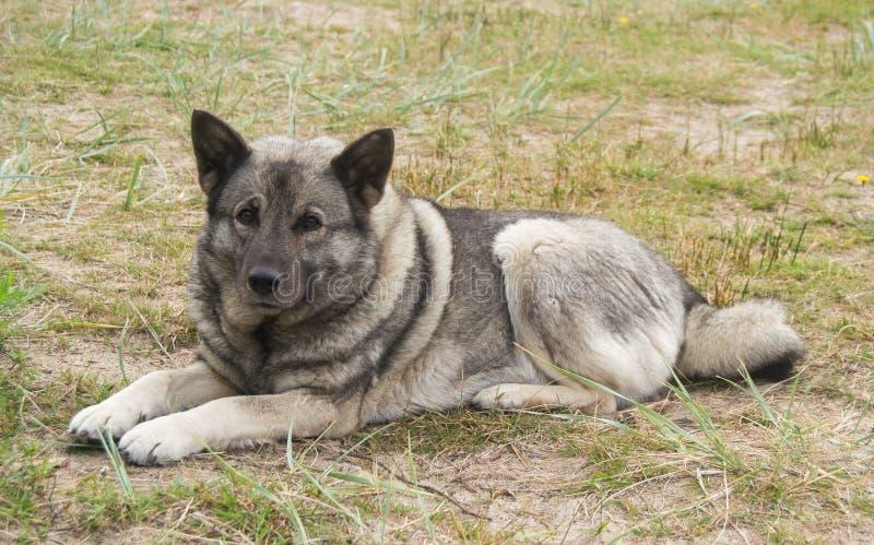 Ένα σκυλί κυνηγιού στοκ φωτογραφία με δικαίωμα ελεύθερης χρήσης