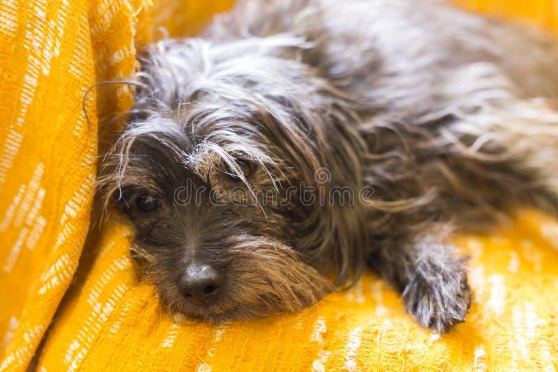 Ένα σκυλί που μένει σε ένα πορτοκαλί υπόβαθρο στοκ φωτογραφίες