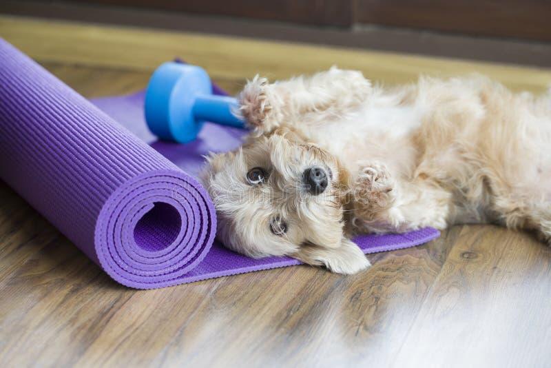 Ένα σκυλί που στηρίζεται στο χαλί γιόγκας στοκ εικόνα με δικαίωμα ελεύθερης χρήσης
