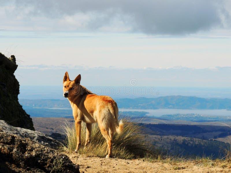 Ένα σκυλί στα βουνά στοκ φωτογραφία με δικαίωμα ελεύθερης χρήσης