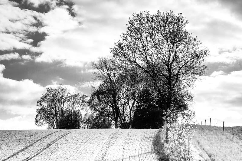 Ένα σπίτι μεταξύ των δέντρων στο φιορδ Faabor στοκ φωτογραφία με δικαίωμα ελεύθερης χρήσης