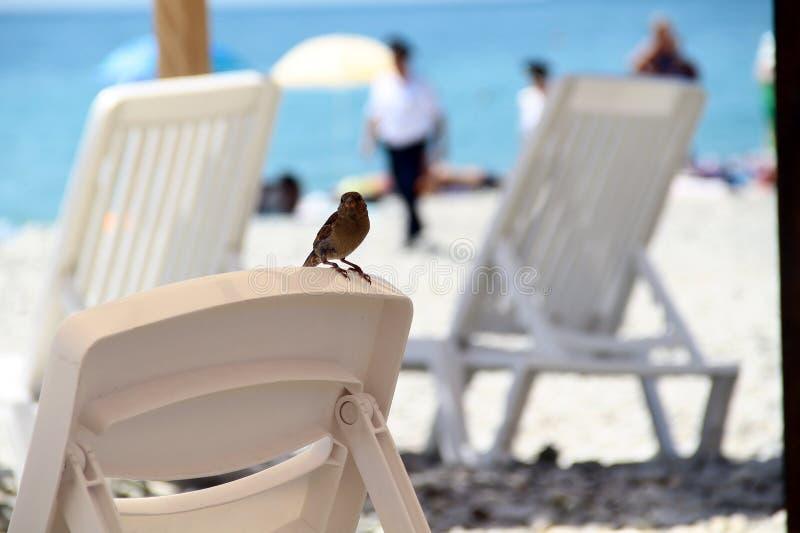 Ένα σπουργίτι στην παραλία κάθεται σε έναν αργόσχολο ενάντια στο σκηνικό της θάλασσας και της αστυνομίας στοκ φωτογραφία με δικαίωμα ελεύθερης χρήσης