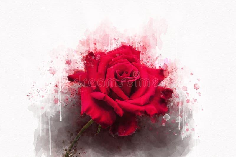 Ένα σχέδιο watercolor δονούμενου ενός κόκκινου αυξήθηκε λουλούδι Βοτανική τέχνη Διακοσμητικό στοιχείο για μια πρόσκληση ευχετήριω διανυσματική απεικόνιση