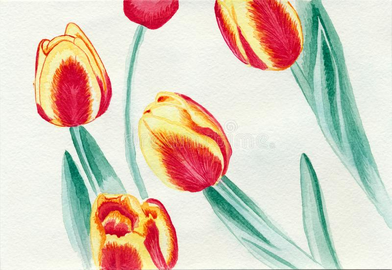 Ένα σχέδιο watercolor μερικών τουλιπών σε ειδικό χαρτί με τη σύσταση ελεύθερη απεικόνιση δικαιώματος