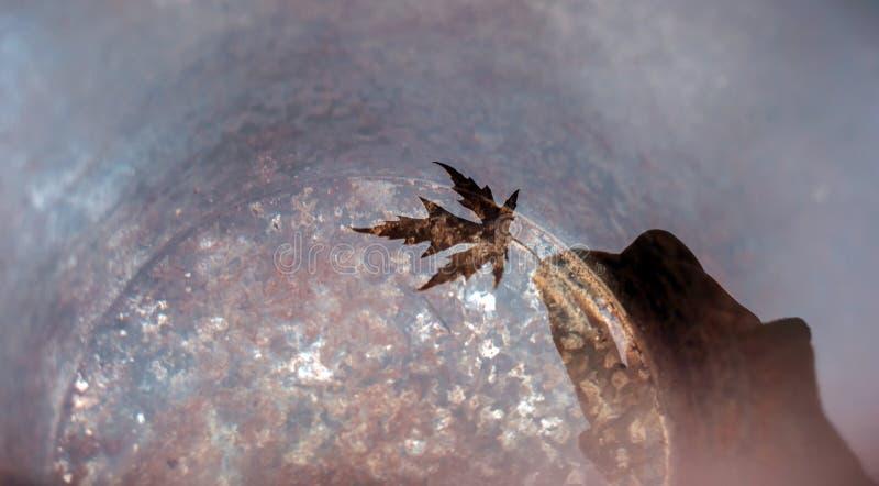Ένα σύνολο κάδων του νερού απεικονίζει ένα χέρι κρατώντας ένα όμορφο φύλλο σφενδάμου τοποθετήστε το κείμενο στοκ φωτογραφία με δικαίωμα ελεύθερης χρήσης