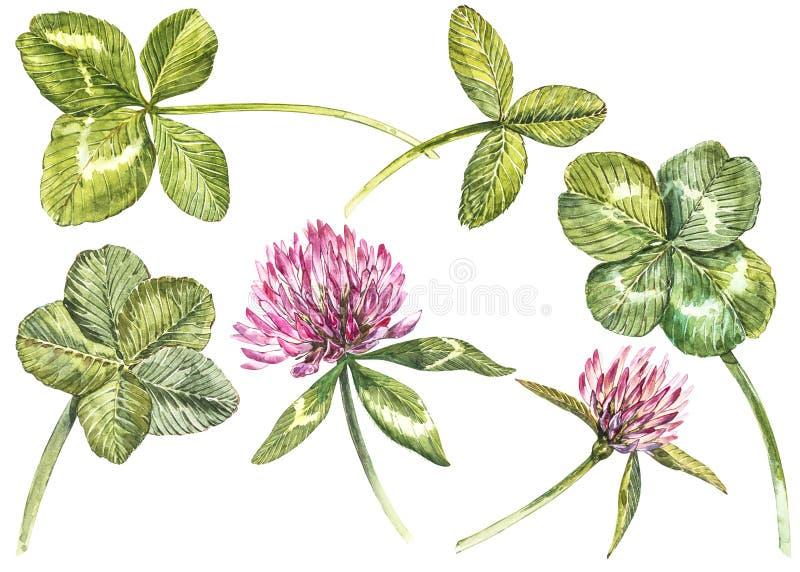 Ένα σύνολο κόκκινα λουλουδιών και φύλλων τριφυλλιού - τέσσερις-που βγάζονται φύλλα και trefoil Βοτανική απεικόνιση Watercolor διά διανυσματική απεικόνιση