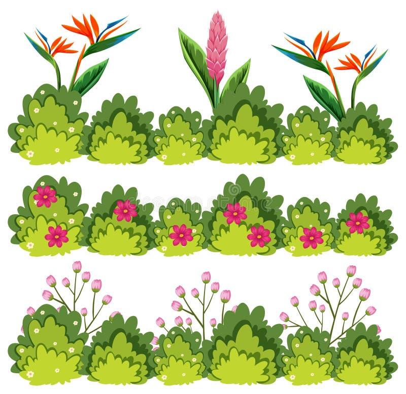 Ένα σύνολο λουλουδιού Μπους απεικόνιση αποθεμάτων