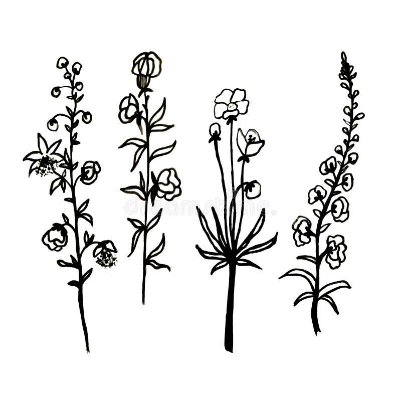 Ένα σύνολο λουλουδιών Οι ανθίζοντας κλαδίσκοι με τα φύλλα σύρονται με το χέρι με το μελάνι και έναν μαύρο στυλό Διακοσμητικά λουλ απεικόνιση αποθεμάτων