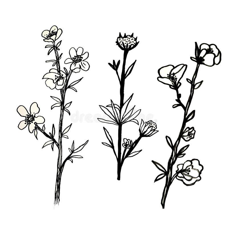 Ένα σύνολο λουλουδιών Οι ανθίζοντας κλαδίσκοι με τα φύλλα σύρονται με το χέρι με το μελάνι και έναν μαύρο στυλό Διακοσμητικά λουλ ελεύθερη απεικόνιση δικαιώματος