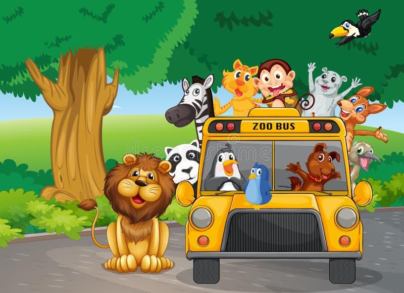 Ένα σύνολο λεωφορείων ζωολογικών κήπων των ζώων διανυσματική απεικόνιση