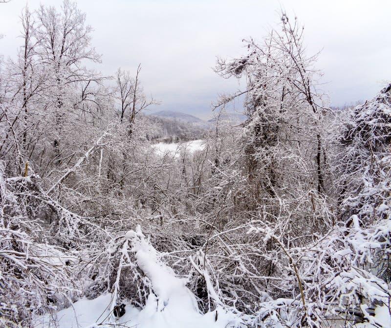 Ένα τοπίο βουνών με το χιόνι και δέντρα στο μέτωπο στοκ φωτογραφίες