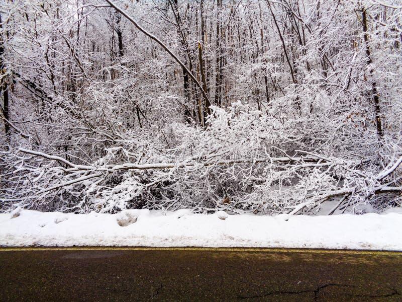 Ένα τοπίο βουνών με το χιόνι και δέντρα στο μέτωπο στοκ φωτογραφίες με δικαίωμα ελεύθερης χρήσης