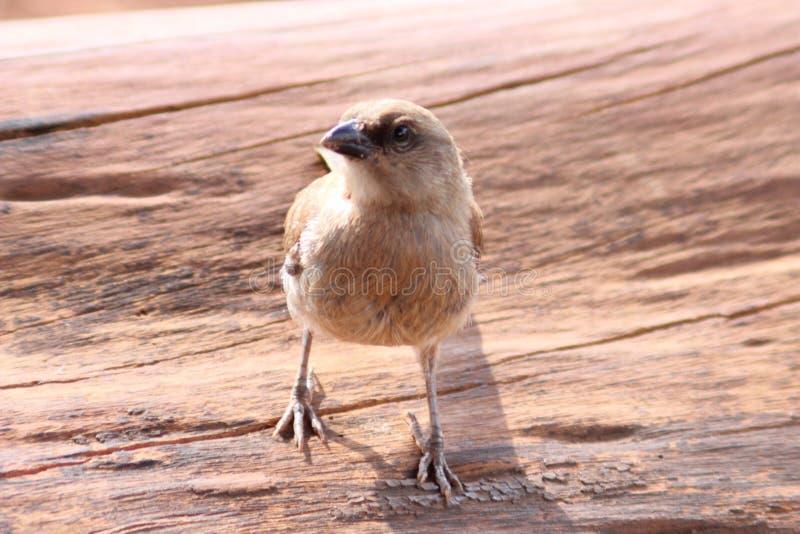 Ένα του χωριού πουλί στοκ εικόνες