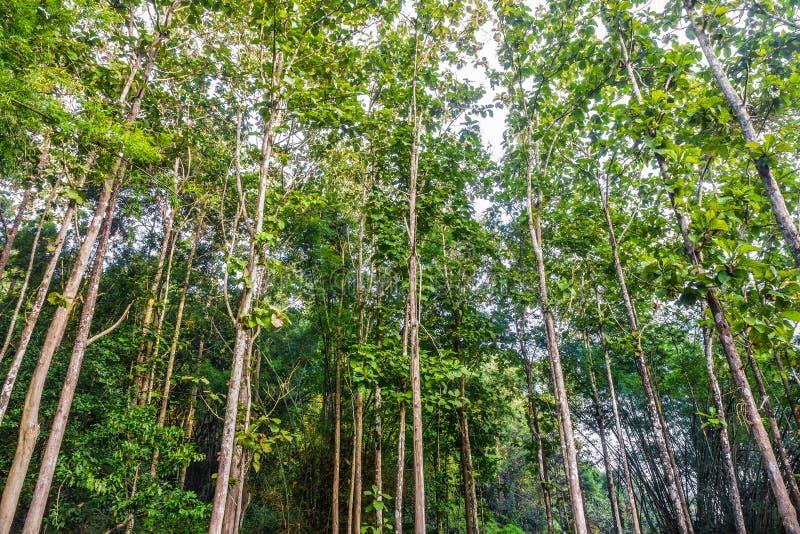 Ένα τροπικό δάσος στοκ φωτογραφία με δικαίωμα ελεύθερης χρήσης