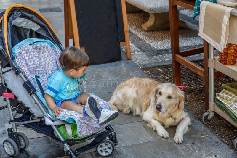 Ένα τρυφερό παιδί εξετάζει ένα σκυλί ενώ στη μεταφορά μωρών του στοκ φωτογραφίες με δικαίωμα ελεύθερης χρήσης