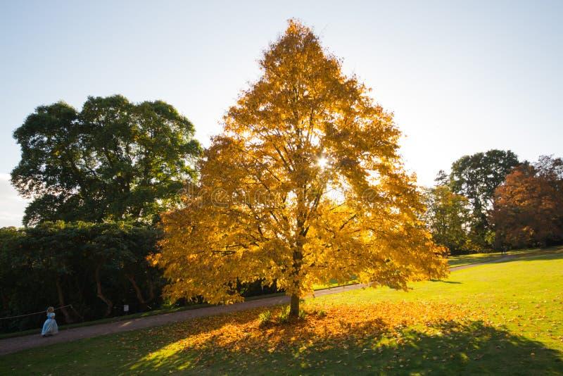 Ένα φλεμένος δέντρο, με τον ήλιο που θέτει πίσω από το στοκ εικόνα