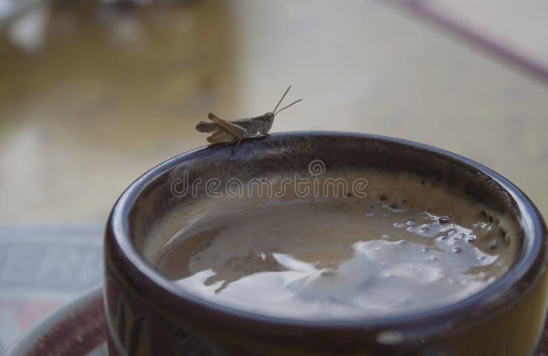 Ένα φλιτζάνι καφέ με έναν απρόσμενο καλεσμένο στοκ εικόνες