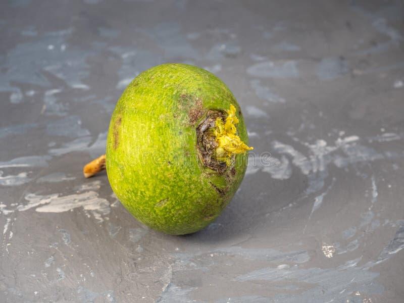 Ένα φρέσκο πράσινο ραδίκι σε ένα γκρίζο επισημασμένο υπόβαθρο με τη μί στοκ φωτογραφία με δικαίωμα ελεύθερης χρήσης