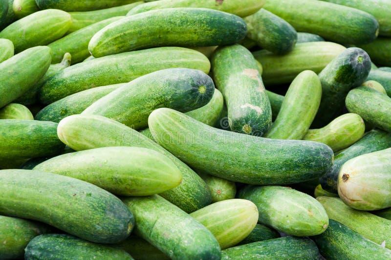 ένα φρέσκο πράσινο υπόβαθρο αγγουριών στην αγορά της Ταϊλάνδης στοκ φωτογραφίες με δικαίωμα ελεύθερης χρήσης