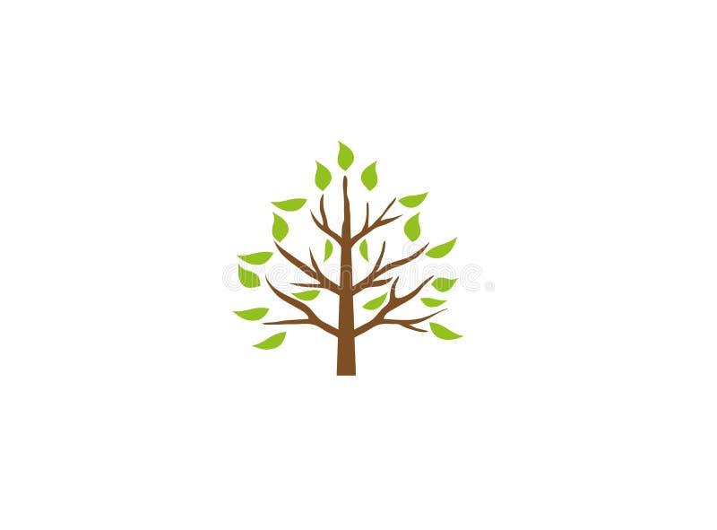 Ένα φυλλώδες δέντρο με τα φύλλα κλαδίσκους στους πράσινους οροπέδιων για το σχέδιο λογότυπων απεικόνιση αποθεμάτων
