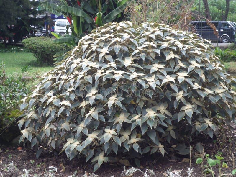 Ένα φυτό στοκ εικόνες με δικαίωμα ελεύθερης χρήσης